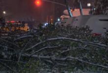 صورة لا تدخل متنزهات نيويورك.. تساقط الثلوج يوقع الأشجار والفروع