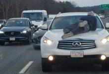 صورة بالفيديو.. خلاف بسيط في ماساتشوتس ينتهي بعجوز يصارع الموت على غطاء سيارة مسرعة