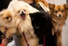 """صورة جديد الأمراض.. """"إنفلونزا الكلاب"""" المميتة قد تهدد البشر"""