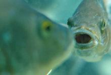 صورة ليس خيالا علميا… يمكن قريبا أن نفهم كلام الأسماك والنحل!