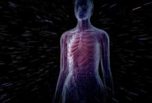 صورة باحثون يبتكرون تقنية تجعل أعضاء جسم الإنسان شفافة.. ما فائدتها؟