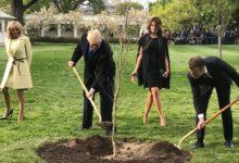 صورة شجرة ماكرون التي أهداها لترامب تموت في البيت الأبيض