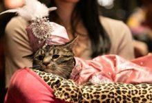 صورة إطلالات جذابة في عرض أزياء القطط السنوي بنيويورك (فيديو وصور)