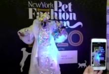 صورة فيديو.. عروض رائعة خلال عرض أزياء للحيوانات الأليفة في نيويورك
