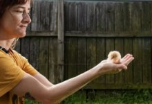 صورة بعض سكان نيويورك يلجأون لتربية الكتاكيت تحسبا لنقص الدجاج فى المتاجر بسبب أزمة كورونا
