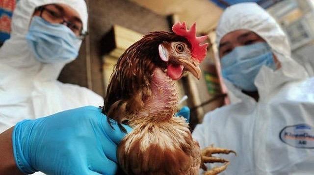 صورة من كورونا لأنفلونزا الطيور.. ظهور أول حالة اصابة بالفيروس في الصين