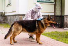 صورة وفاة أول كلب مصاب بفيروس كورونا بأمريكا فى ولاية نيويورك