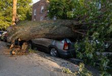 صورة بسبب العاصفة.. شجرة تسقط على سيارة وتساويها بالأرض في كوينز