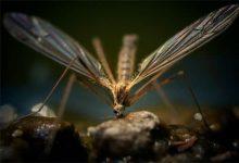 صورة فلوريدا تطلق الملايين من البعوض في مهمة انتحارية