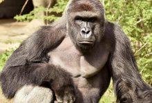 صورة جدري القرود.. جائحة جديدة قد تهدد البشرية
