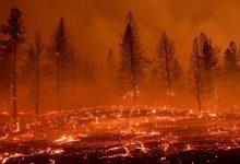 صورة بالفيديو والصور.. ولاية أمريكية تشهد واحدًا من أسوأ حرائق الغابات