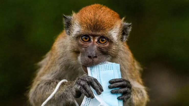 صورة البحث عن 200 شخص في 27 ولاية أمريكية لمنع تفشي فيروس جدري القرود