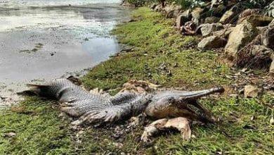 صورة لأول مرة يتم اصطيادها .. صياد أمريكي يحظي بسمكة من عصر الديناصورات