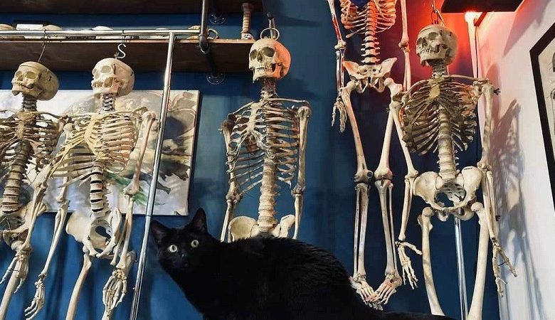 صورة شاب يفتتح محلاً لبيع عظام بشرية حقيقية في نيويورك