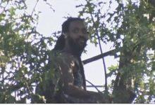 صورة رجل يهرب من الشرطة في بروكلين فوق شجرة والضباط ينتظرونه أسفلها 3 أيام